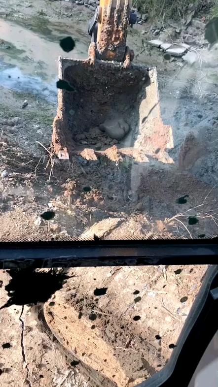 今天挖出来的。