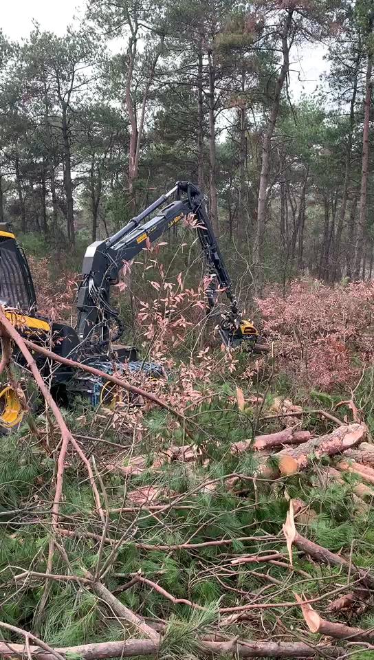 进口全自动伐木机