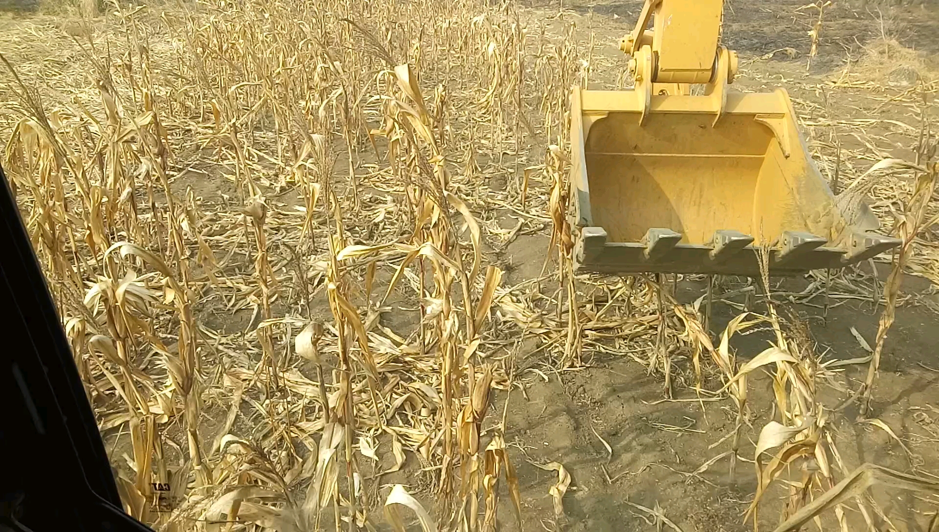 【铁甲视频】穿过玉米地