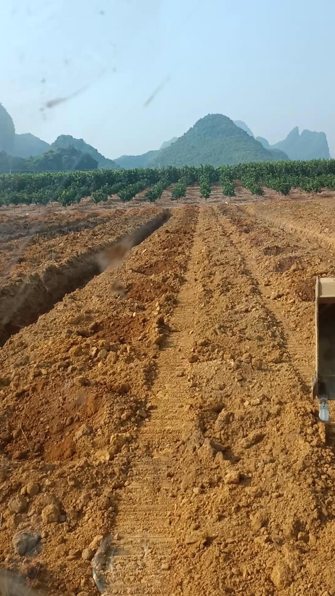 一9C一天九个小时挖坑二十几亩,明天我给我自己放放假了!