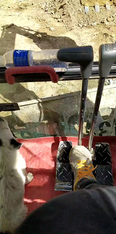 小奶狗也喜欢挖掘机