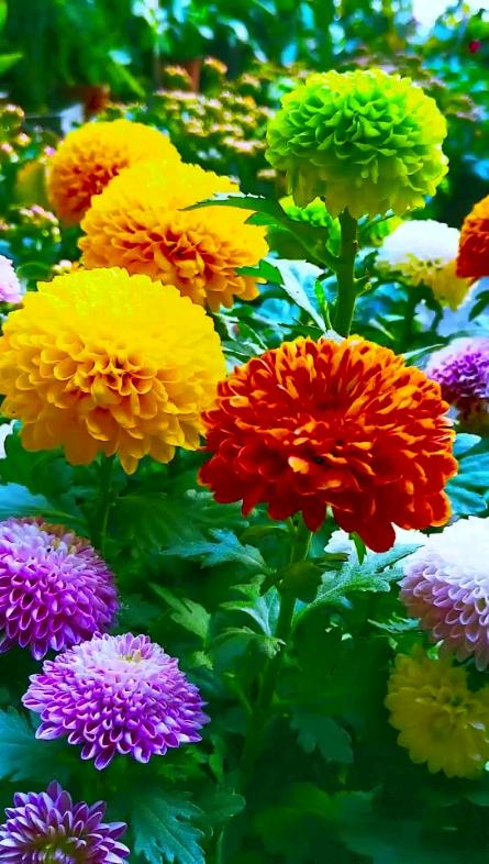 看花开花落落