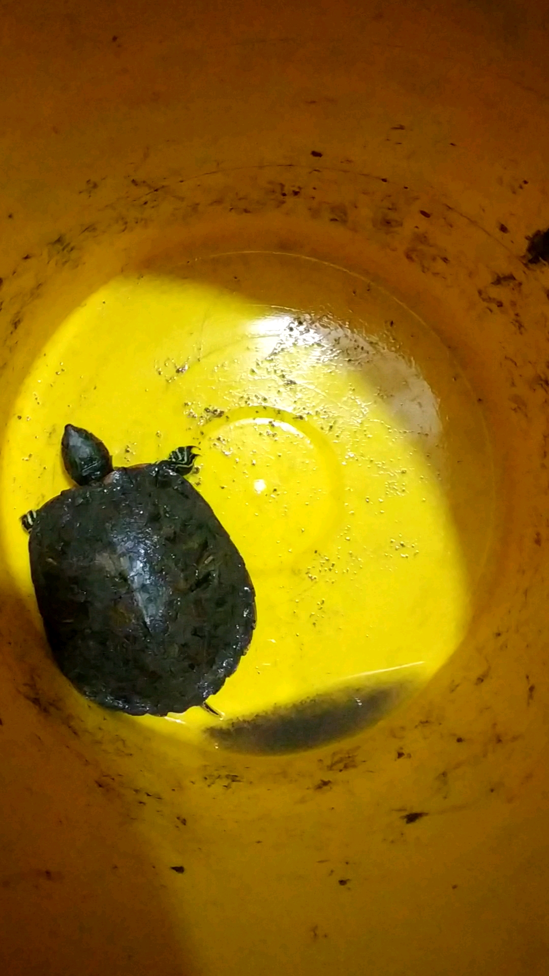 抓了一只小乌龟