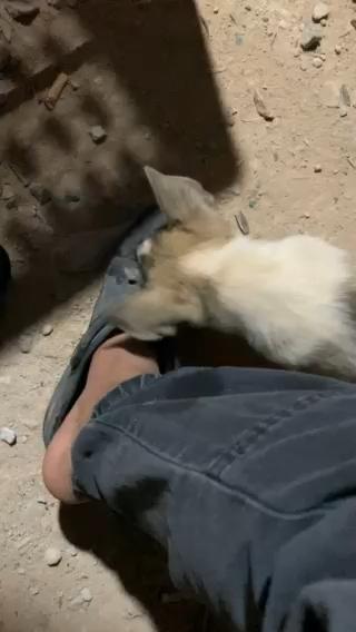 【视频大赛】舔狗舔狗一无所有