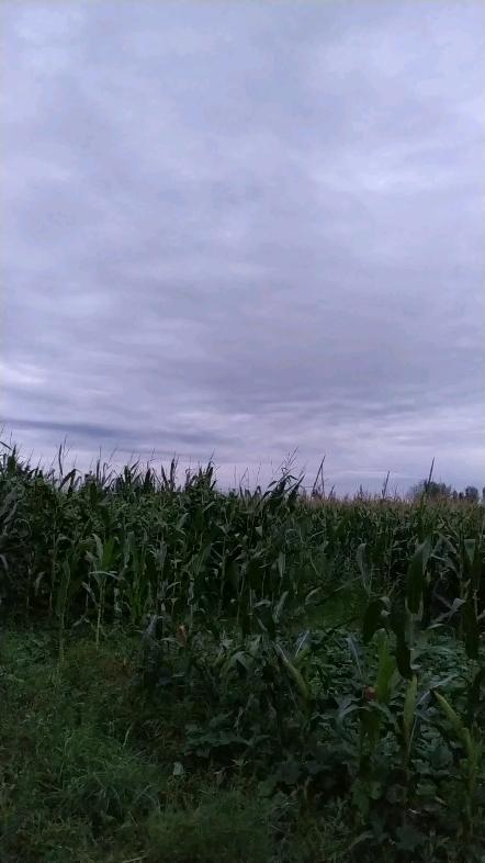 雨后的天空