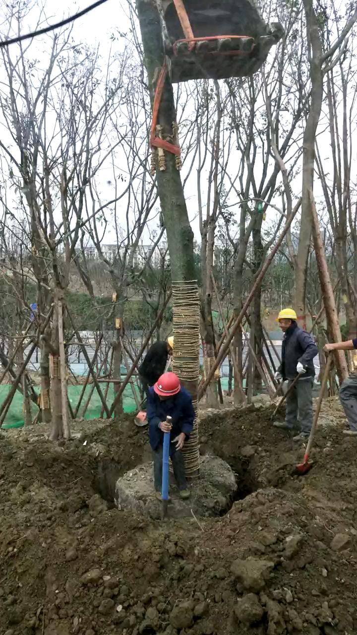 植树造林,公园城市