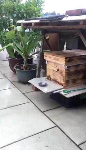 不好养蜂子哦